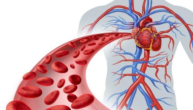 Soal Sistem Peredaran Darah