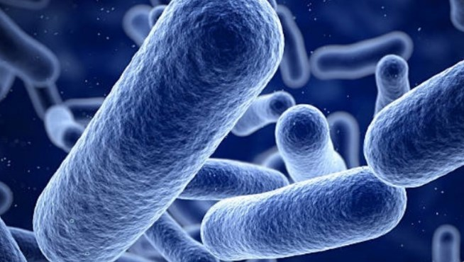 Faktor Mempengaruhi Pertumbuhan Mikroba