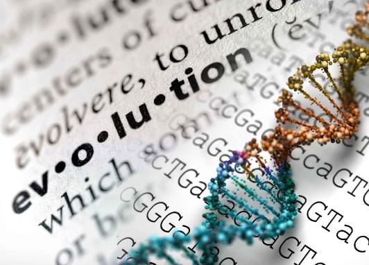 Soal dan Pembahasan Evolusi