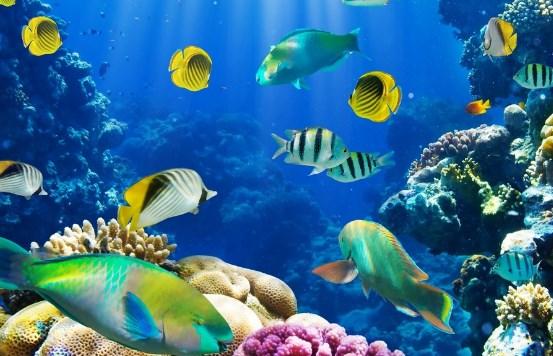 Soal dan Pembahasan Klasifikasi Makhluk Hidup